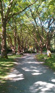 park-walk-431955_1280