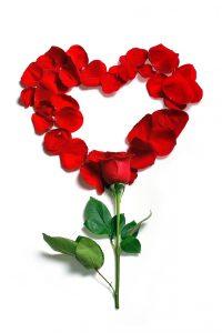Beliebtes Valentinstag-Geschenk: Rose